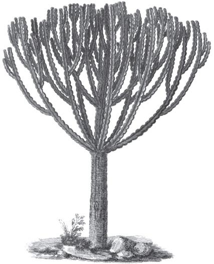 Kol-quall tree